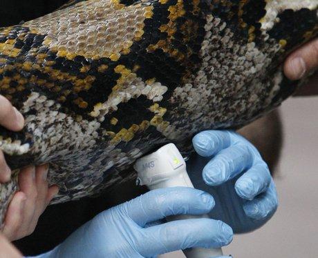 chester zoo snake health check