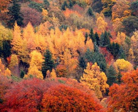 autumn, indian, summer