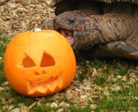 Cotswold: Halloween Animals 1