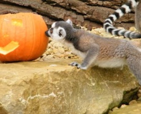 Cotswold: Halloween Animals 1