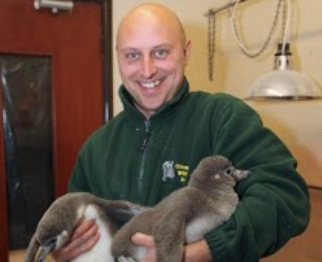 Penguin Cotswold Wildlife Park