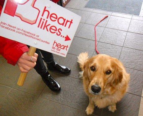 Heart Likes