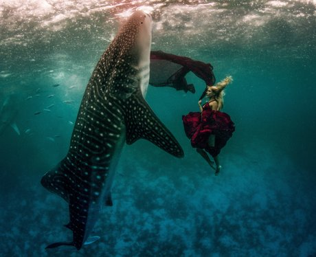 Models diving with whale sharks