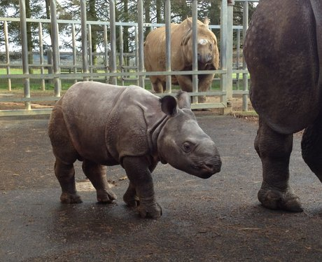 Whipsnade Zoo's 2013 Stocktake