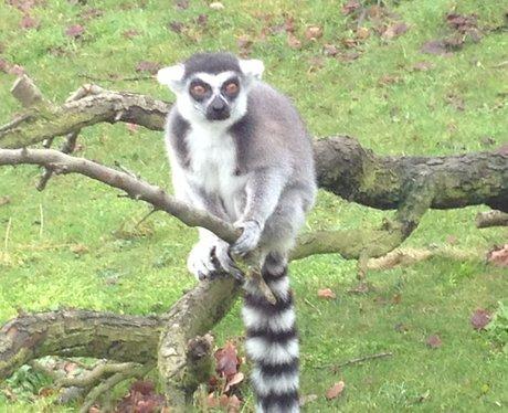 Whipsnade Zoo's 2013 Stocktake