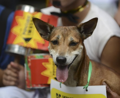 Puppies protesting in Manila