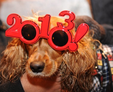 A dog wearing 2013 sunglasses