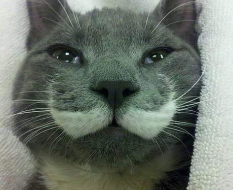 Cat posted on Imgur.com via Reddit