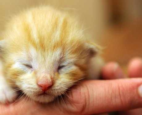 Eight day old kitten
