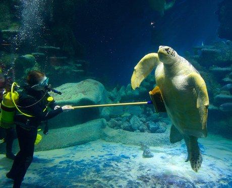 A turtle and Aquarist at the London Aquarium
