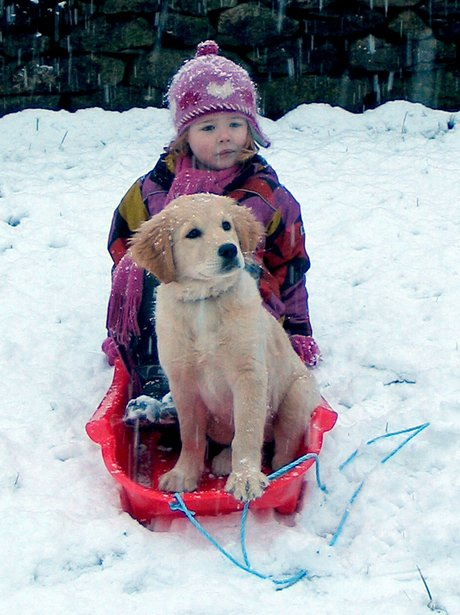 Puppy dog and young girl in the snow
