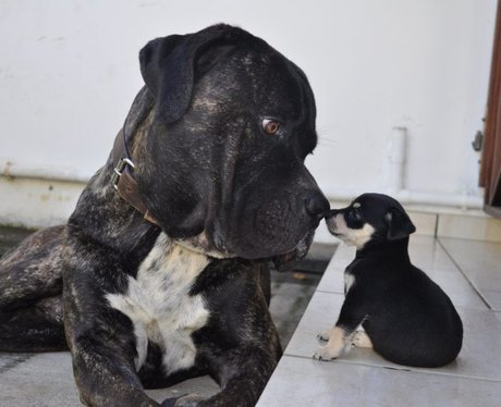 A dog and puppy