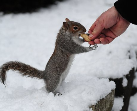 A squirrel eating a nut from a man's hand
