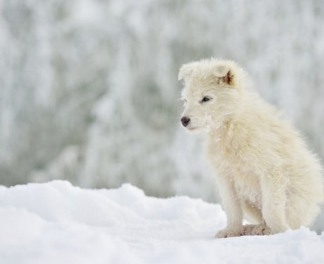 A puppy in the snow