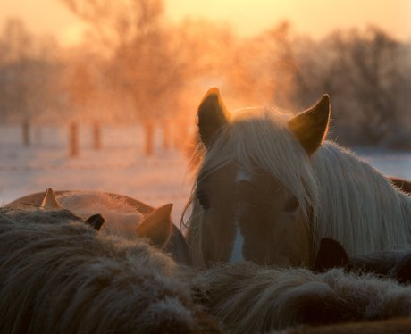 Horse standing in a paddock at sunrise