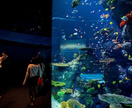 World's largest aquarium in Singapore