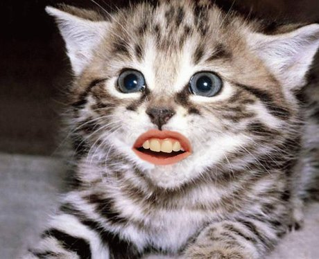 Animals with human mouths