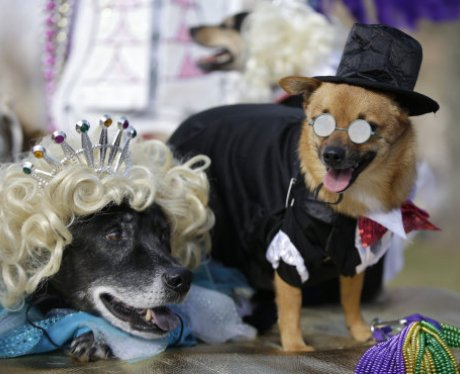 Costumed dogs