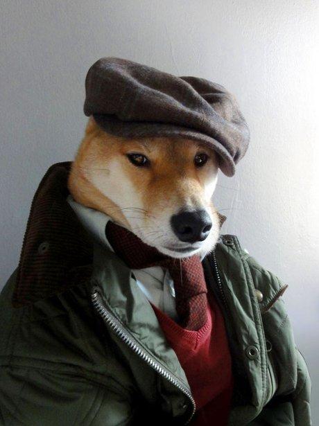 Dogs modelling menswear