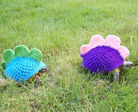 Tortoises in Knitwear