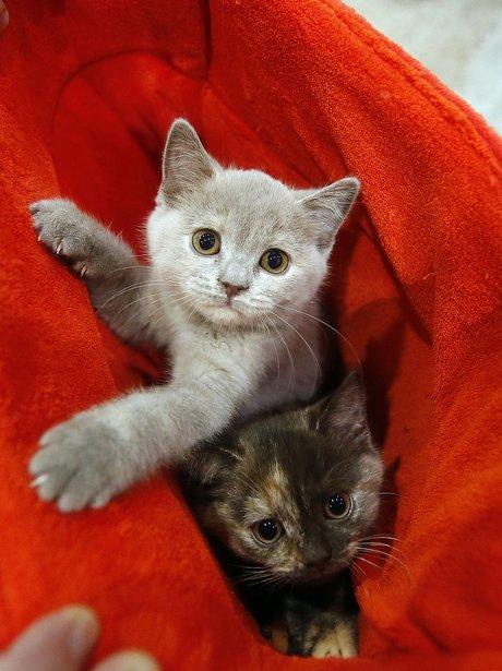 cutest photos