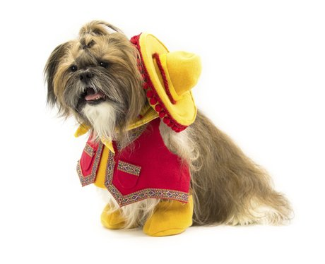 Dog in Cowboy outfit