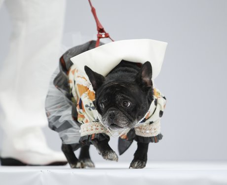 Best dressed dogs