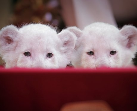 Cutest pictures of the week
