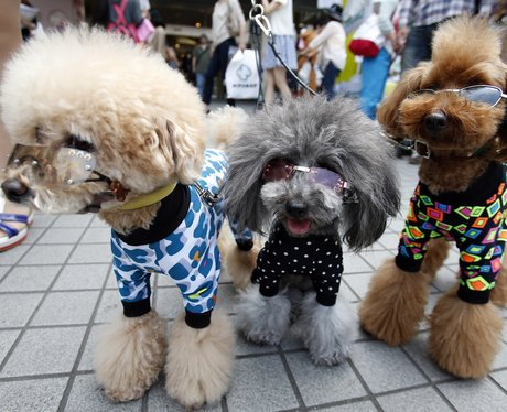 Cute Pictures Of The Week