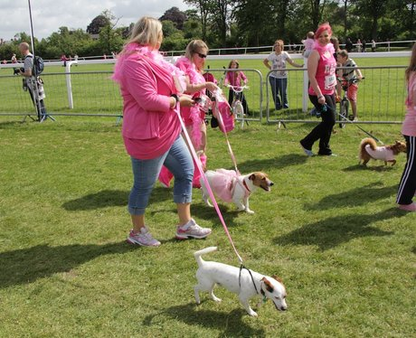 The Dogs of Worcester RFL