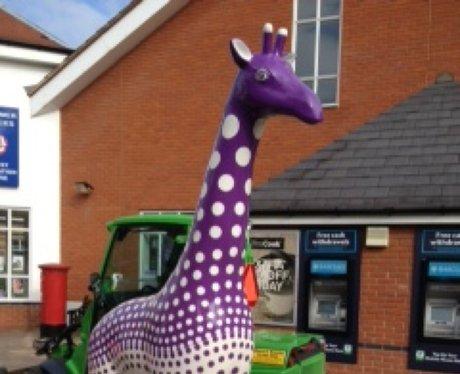 Stand Tall Giraffes