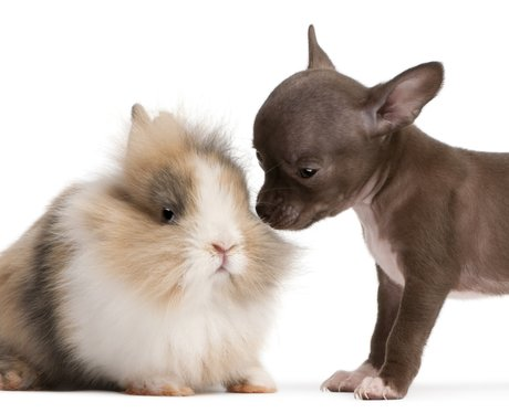 Fluffy Bunny And Puppy pose together