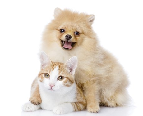 Fluffy Dog And Cat sit together