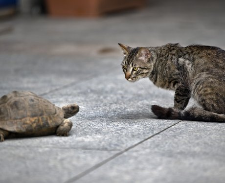 A Cat And Turtle In Turkey