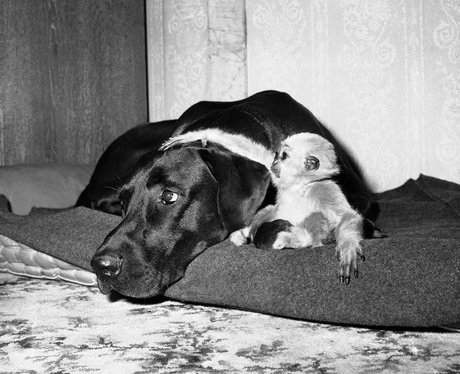 A dog and baby monkey become friends