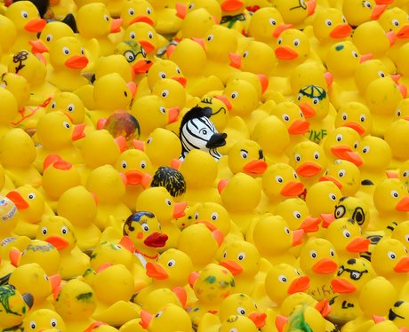 plastic ducks