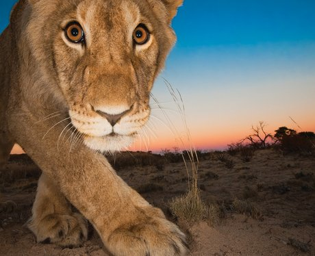 Photographer Hannes Lochner Wildlife Photographer