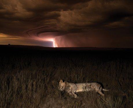 Photographer Hannes Lochner Wildlife Photographer