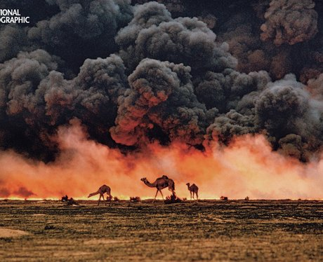 Camels before boling oil fields.