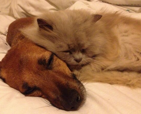 cats and dogs sleeping next to each other