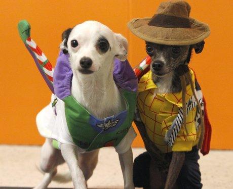 Dogs in Toy Story fancy dress