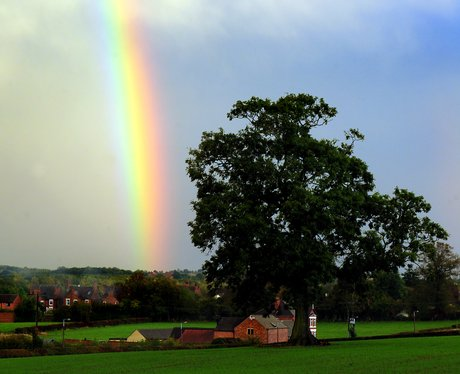 A rainbow in a field