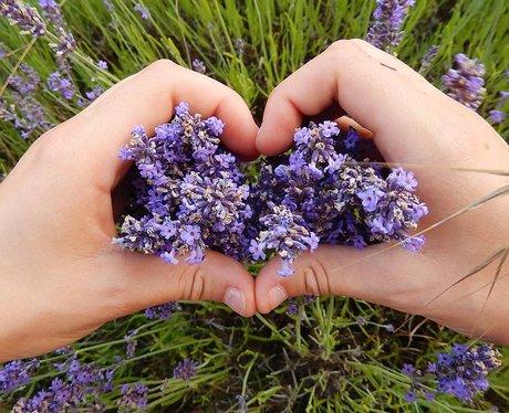 Lovin The Lavender