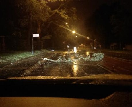 Trees down in Hampshire