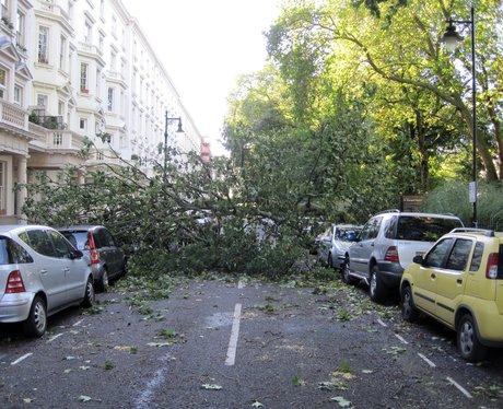 fallen tree in a london street
