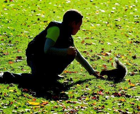 boy feeds squirrel in the sun at Tamworth