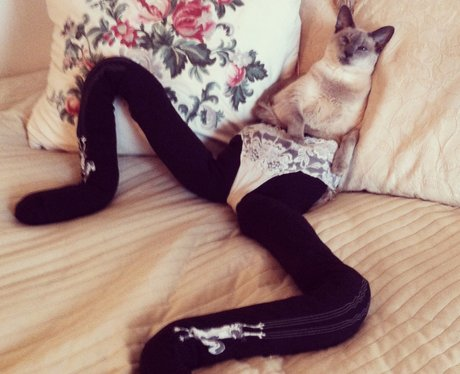 Gucci the cat in tights