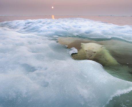 bear in natural habitat