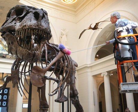 A T.Rex skeleton