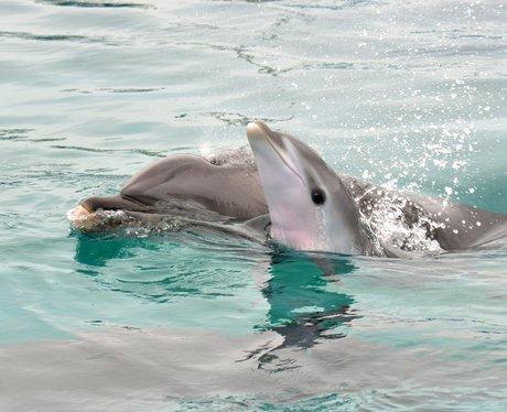 Bottlenose dolphins swimming at SeaWorld